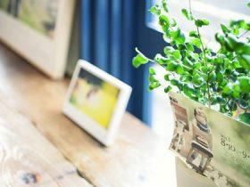 多治見のカフェ「LUPOS(ルポ)」でフォトグラファーSatomiさんの写真個展