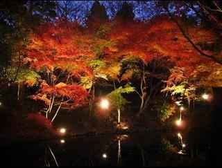 多治見市紅葉スポット!生田公園で逆さ紅葉が楽しめる♪
